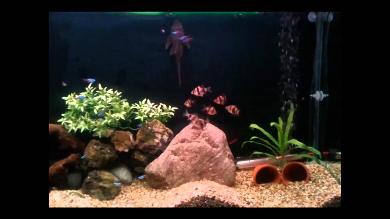 fish tank 200 litres 45 gallon aquarium youtube. Black Bedroom Furniture Sets. Home Design Ideas