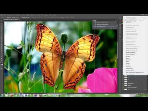 Анимация бабочки в Adobe Photoshop