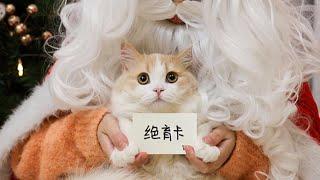 花花与三猫-过完圣诞过元旦-过完元旦就割蛋-猛猫落泪