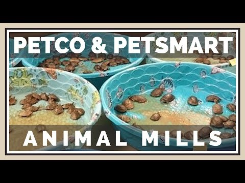Never Buy Animals From Petco Or PetSmart | Animal Mills