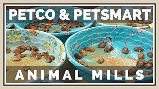 Never Buy Animals from Petco or PetSmart | Animal Mills
