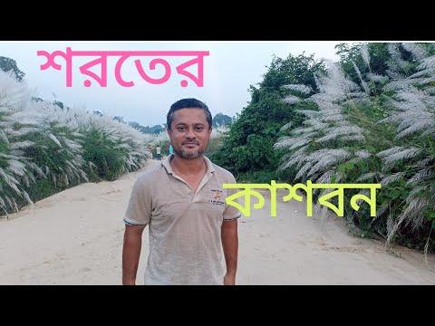 Download সিলেটের হবিগঞ্জ জেলার কাশবন    Kashbon in Sylhet    Beautiful  Kashbon in Habiganj