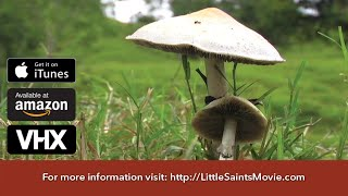 Little Saints - Trailer - Eat a mushroom, talk to God.