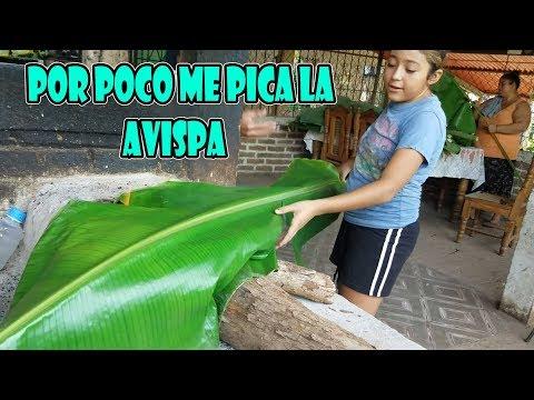 OMG!! LAURA CASI LE PICA LA AVISPA , CORTANDO HOJAS PARA SER UNOS RICOS TAMALES  - P / 4 thumbnail