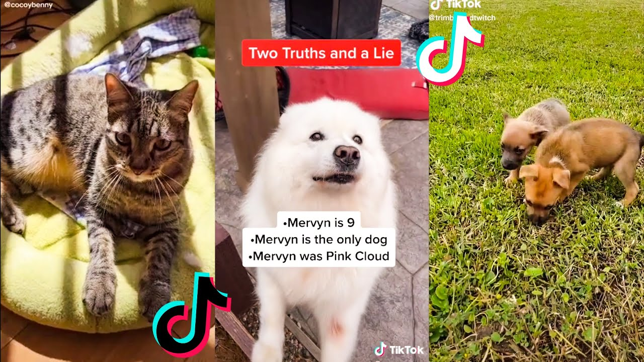 Cute TikTok Compilation Pets That Will Cheer You Up  🥰#4