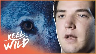 Lone Wolf Attack! | Human Prey | Real Wild Documentary MP3