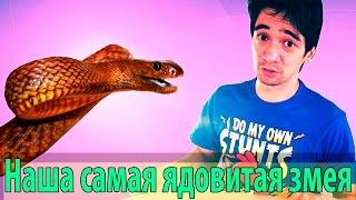 Самая ядовитая змея в нашей коллекции