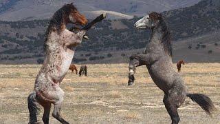 #3112. Лошади (В мире животных)