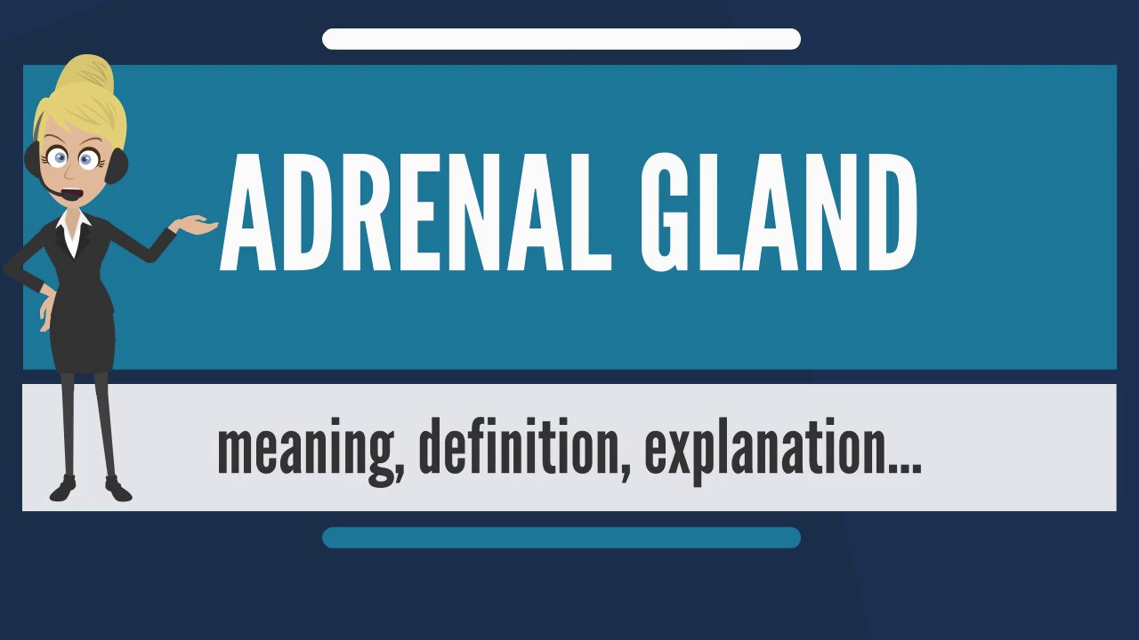 what is adrenal gland? what does adrenal gland mean? adrenal gland