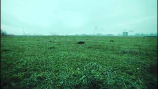 Грибы- тает лёд  (премьера 2017 )
