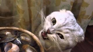 видео Кошка ест комнатные растения: что делать?