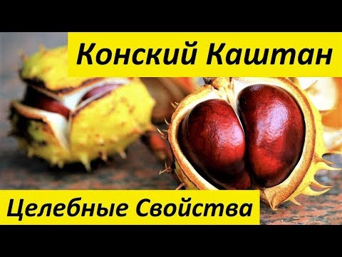 Конский Каштан. Целебные Свойства Плодов, Листьев и Коры Дерева