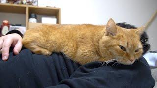 猫が上に乗っている夢を見ている時に実際に乗っていたお話。