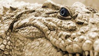Топ 5 самых опасных существ в мире(, 2016-11-27T10:48:27.000Z)