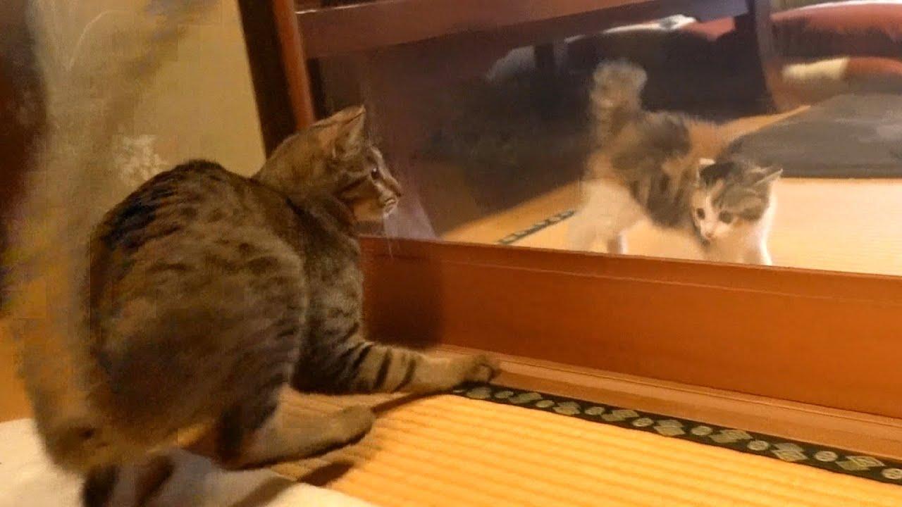 新入り子猫にビックリして飛び上がっちゃう先輩猫