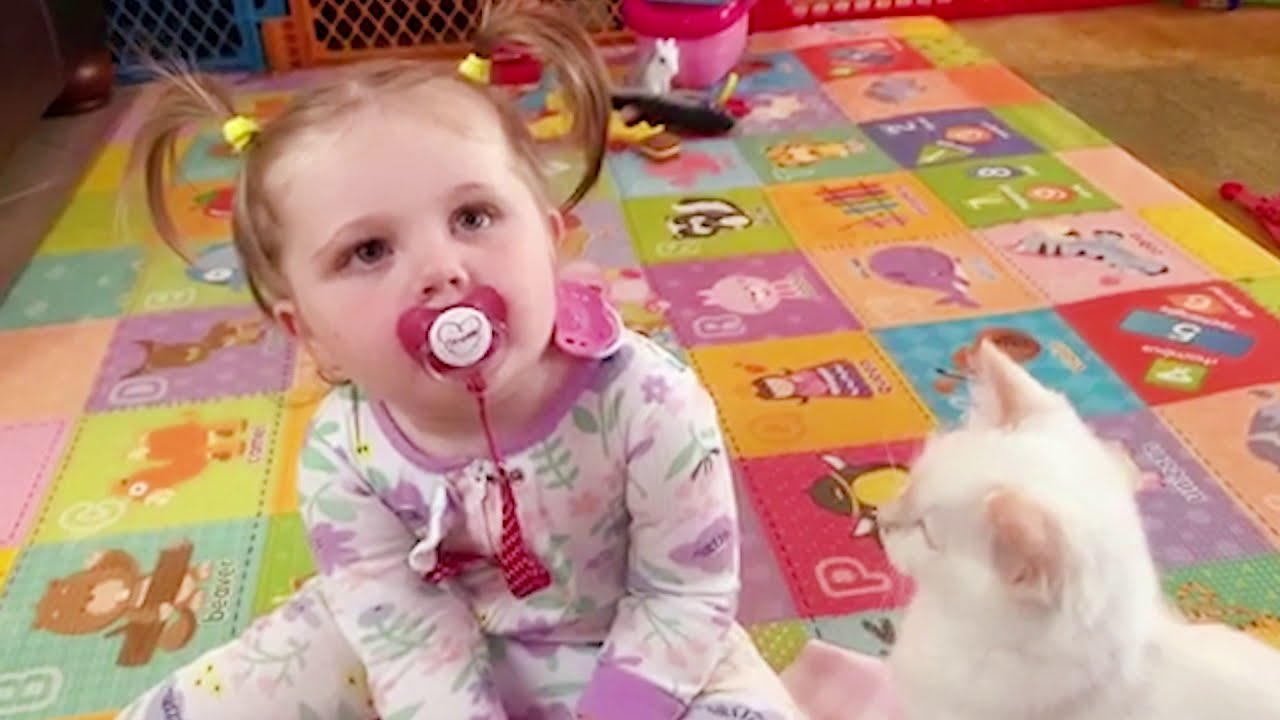 Funny Baby Playing With Pets Compilation - Fun and Fails