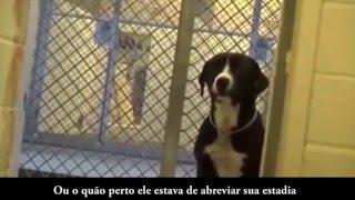Reação de um cachorro ao ser adotado