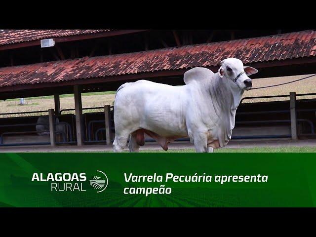 Varrela Pecuária apresenta campeão na prova de ganho de peso da Embrapa