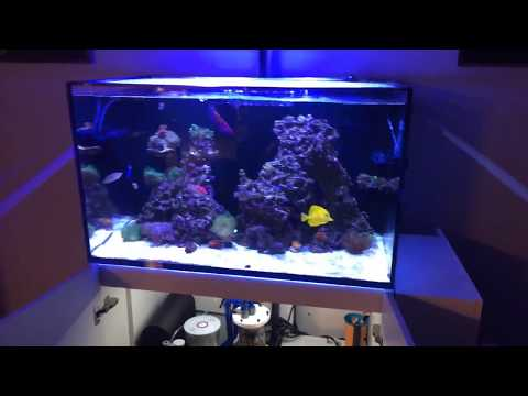Red Sea Reefer 250 | 1 Year | No Tank Motivation aka Bored With It!
