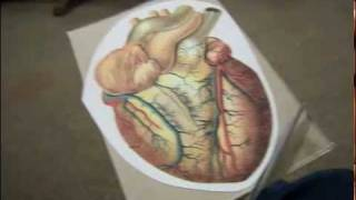 Как сделать коробку в форме человеческого сердца(http://www.portalznaniy.ru Ознакомительное видео о том как из бумаги сделать коробку в форме человеческого сердца свои..., 2012-01-29T08:51:26.000Z)