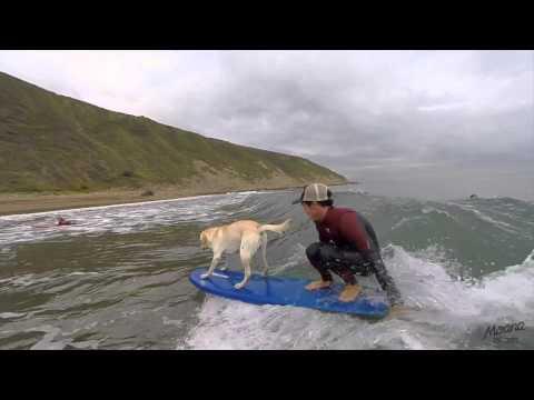 Mendi nuestro perro Surfer en MOANA SURF CAMP