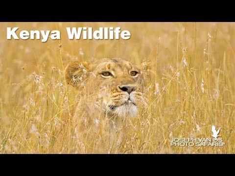 Kenya Wildlife Photo Safari—Masai Mara, Samburu and Lake Nakura