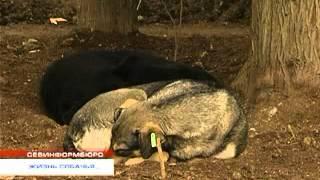 Ложь зоофилов об отравлении детей