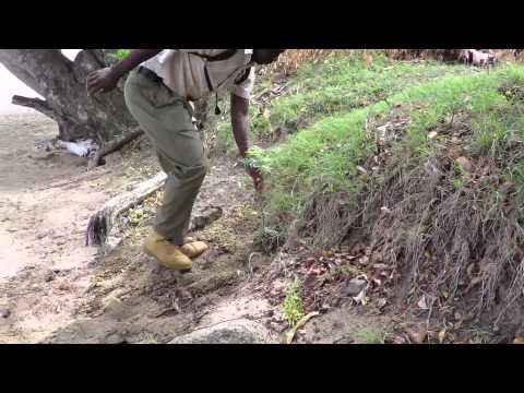 Tree planting on Bequia Island, St. Vincent and the Grenadines (Timelapse)