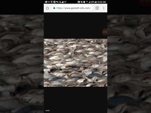 Urgent Dream - Dead Fish in the Ocean