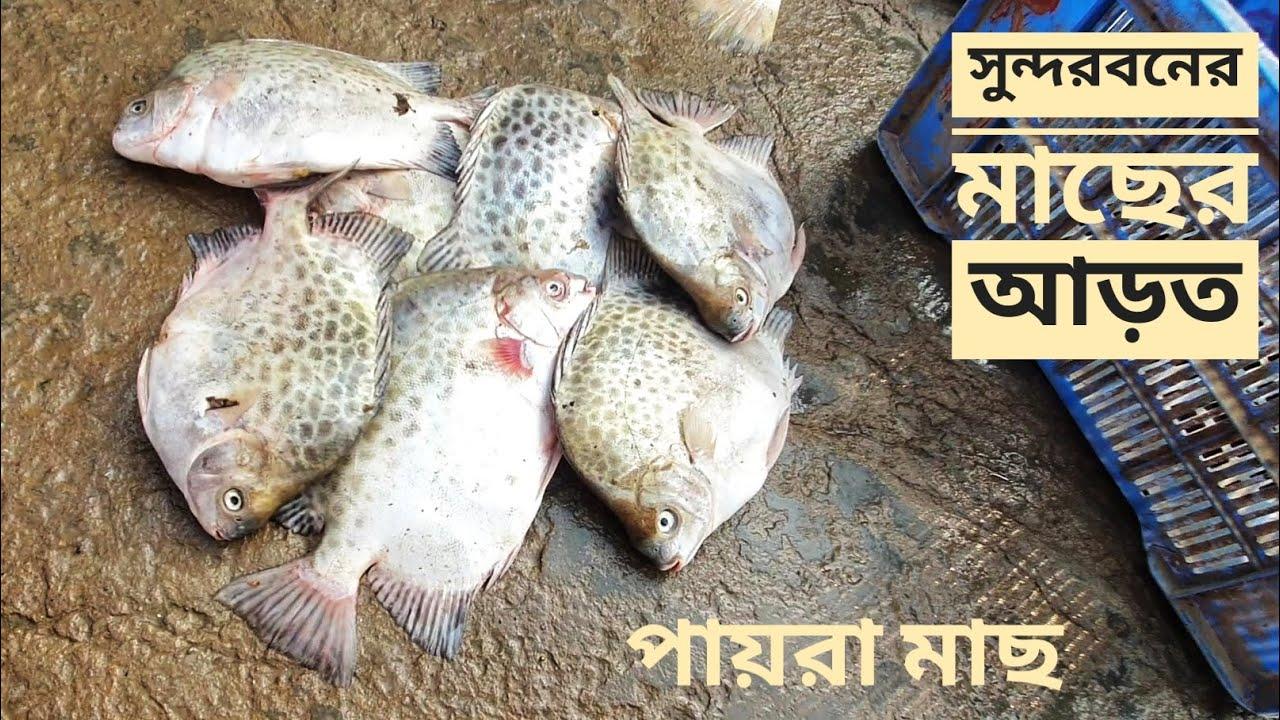 কলবাড়ী মাছের আড়ত   সুন্দরবনের মাছ   সিজন ০৫   পর্ব ২৮   Sundarbans   Mohsin ul Hakim