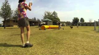 Australian Onemind Dog Enthusiasts: Agility Technique Training