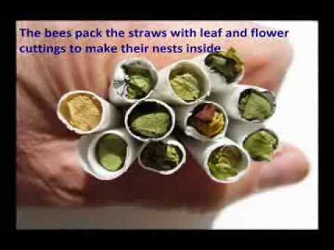 leaf cutter bees how to get rid of