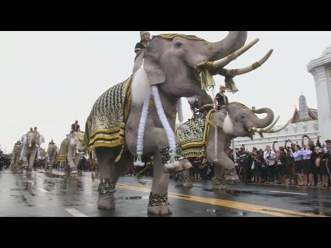 Dancing elephants pay tribute to late Thai king