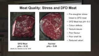 Maximising Meat Quality - Dr David Farrell (AFBI)