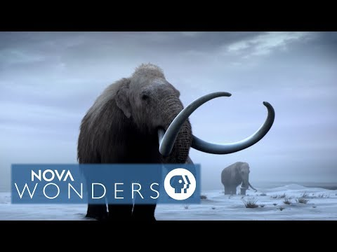"""""""复活""""灭绝4000年长毛象?科学家曝重生时间点"""