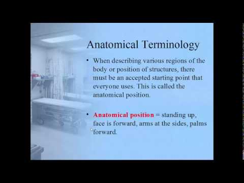 Human Body: An Orientation