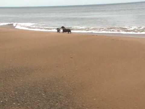 beachy 3.MOD