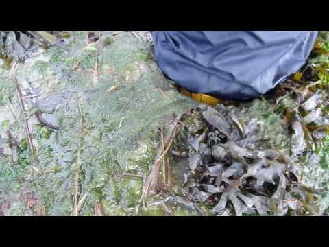 Zivalco Boots in Estuary Mud Part 2