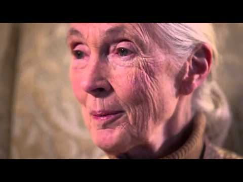 What does Dr. Jane Goodall think about Rupert Murdoch's purchase of National Geographic?