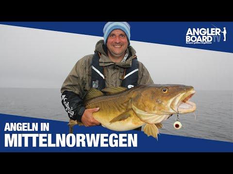 Angeln in Mittelnorwegen | Åfjord: Großdorsch, Heilbutt, Pollack & Rotbarsch fangen | Anglerboard TV