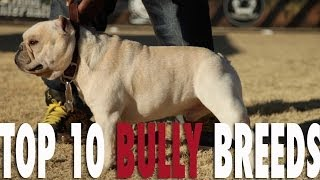 TOP 10 BULLY BREEDS