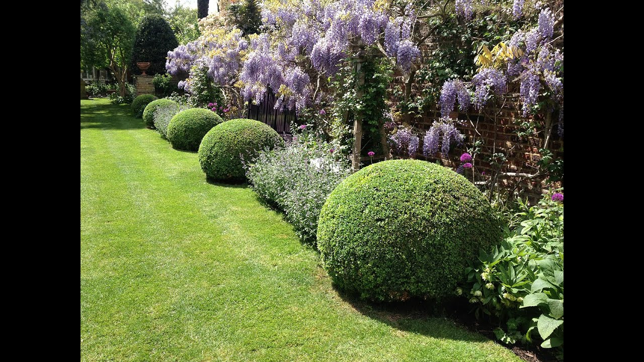 Topiary. Care And Maintenance Of Buxus