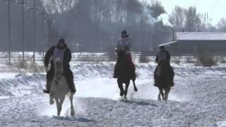 Рысь под седлом Шушенское 2016 (Horse–Animal-racing-конь-смотреть-онлайн-скачка)