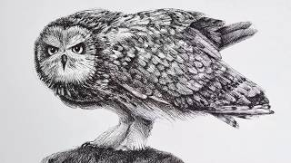 Drawing an Owl With Fountain Pen - Time Lapse
