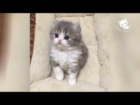 Funny CAT Compilation   Best Videos #2