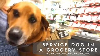 Service Dog at a Grocery Store |VLOG|
