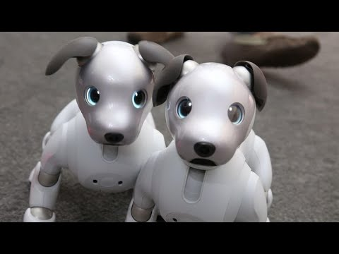 Sony's adorable new Aibo comes to the US in Sept, priced at $2899