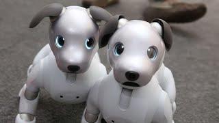 Aibo de Sony: El perrito robot es más adorable en su segunda versión