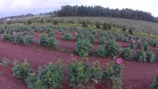 DJI Phantom 2 Vision Plus Wood's Farms PEI Sept 2014