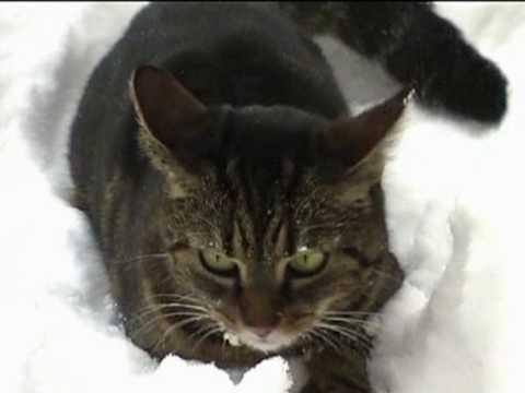 ruevo: ABC, die Katze lief im Schnee - ABC, The cat ran in the snow... Kinderlied 猫